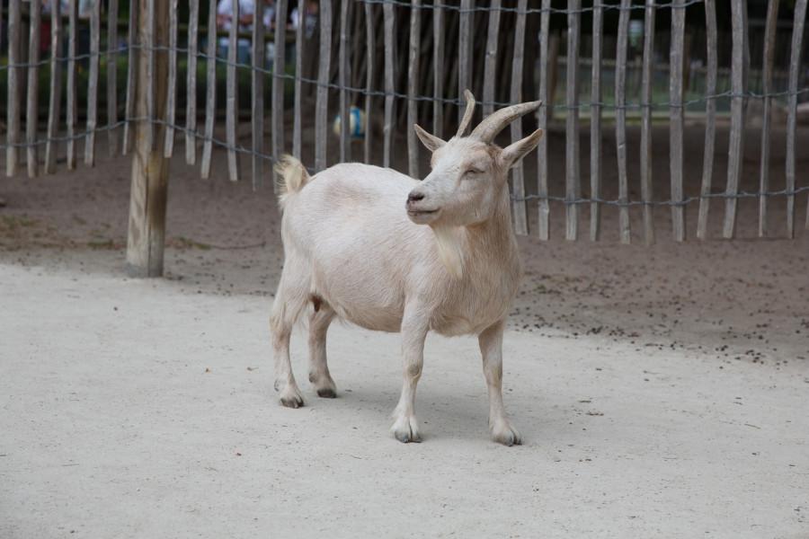 karlsruhe-zoo-1154