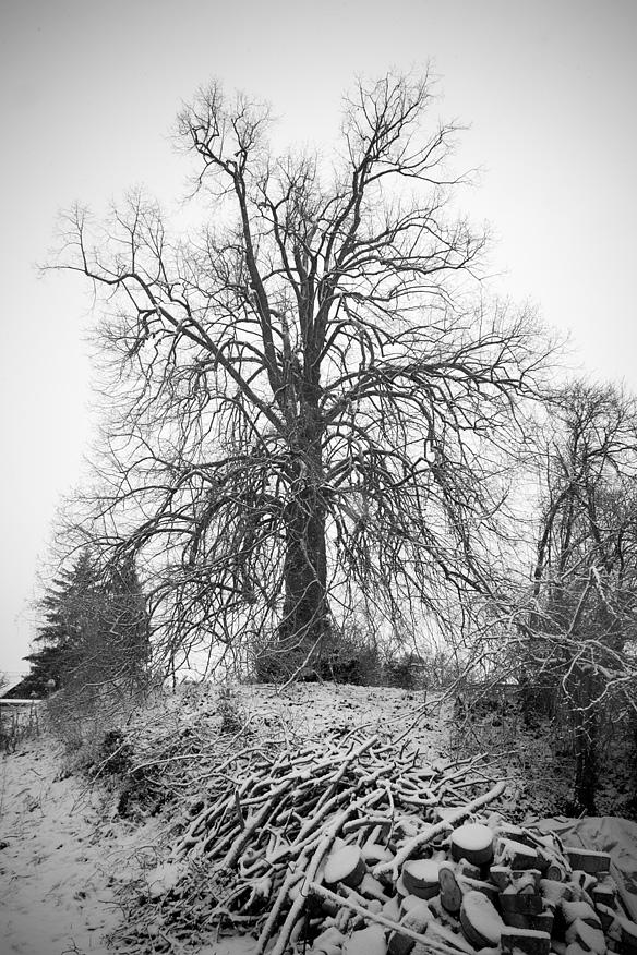 Baum in Dürrmenz