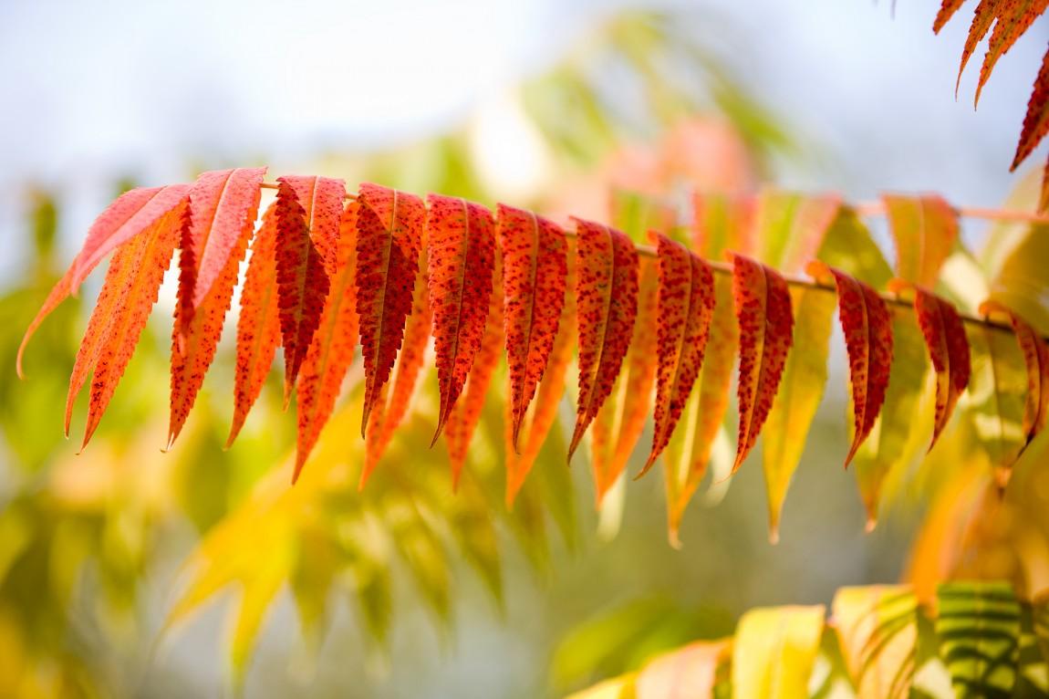 Mühlacker im Herbst