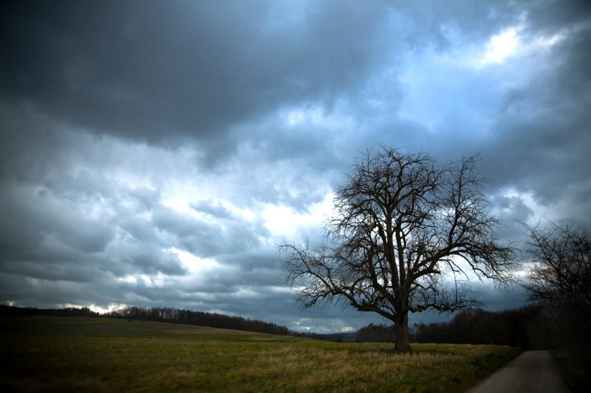 Der Himmel und der Baum