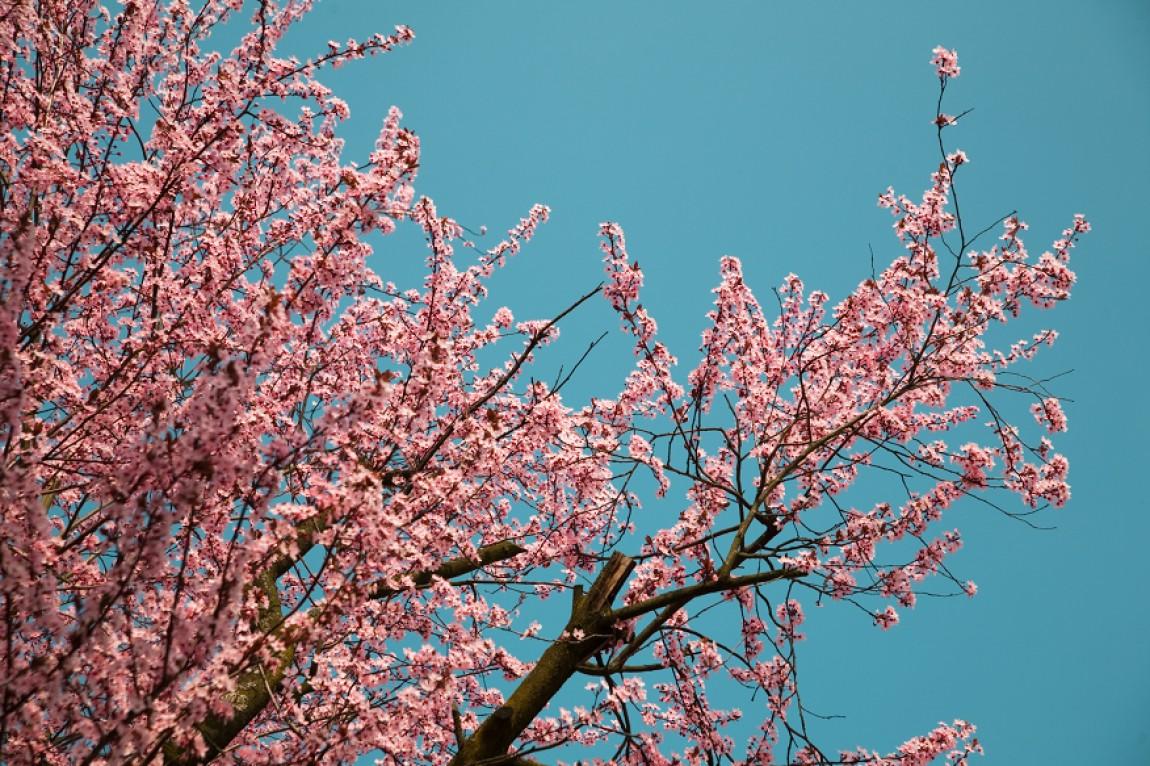 Frühling – Blüten