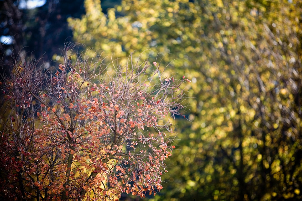 Herbst Bokeh