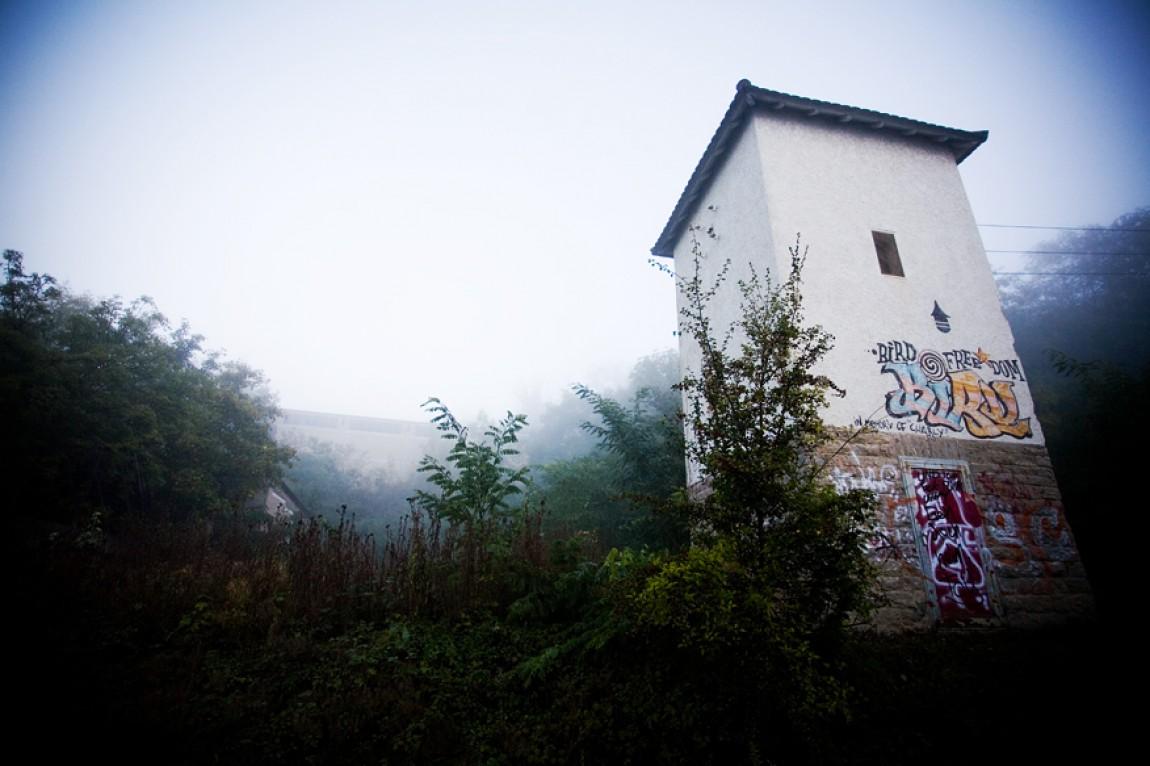 Bird-Graffiti Mühlacker