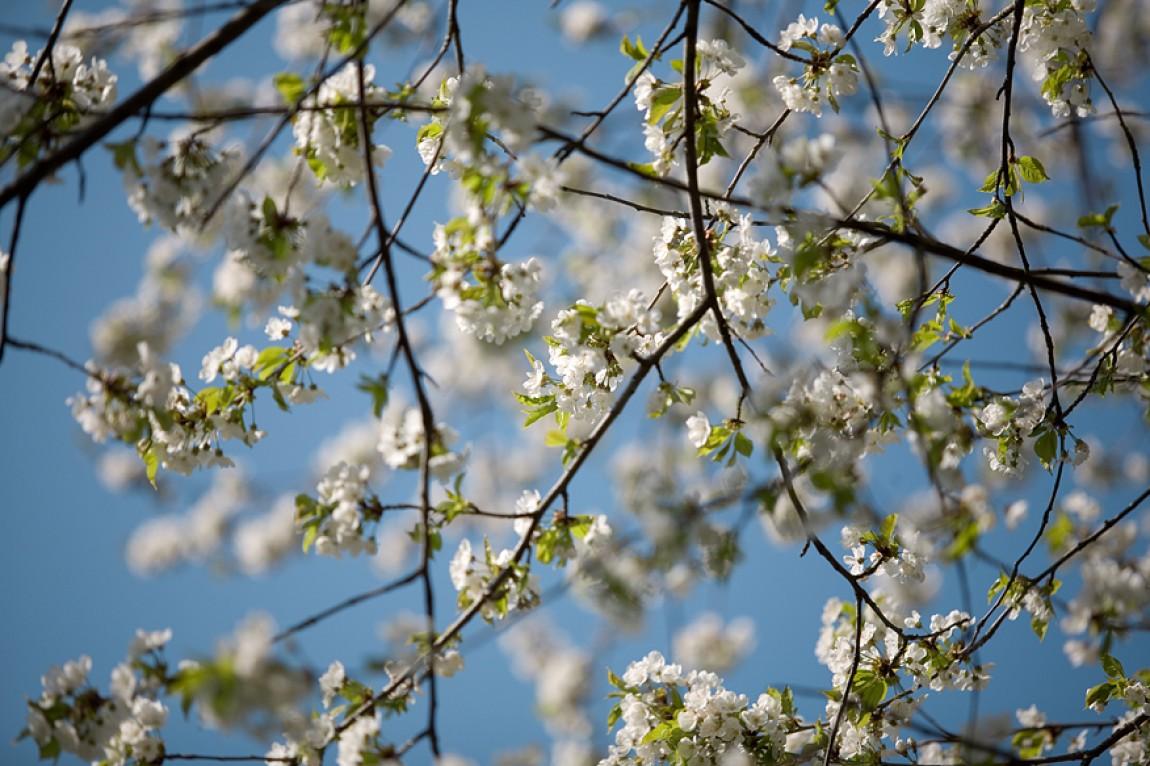 Spring Break2