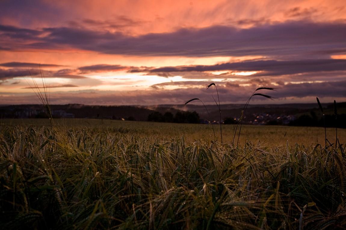 Sonnenuntergang in Eisingen