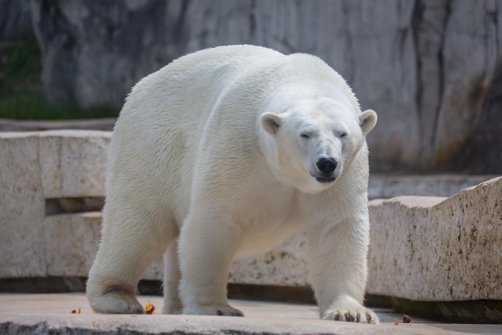 ste7130  u00bb zoo karlsruhe